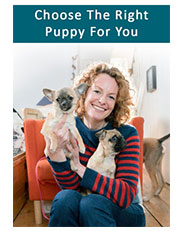 Choose The Right Puppy For You  BBC, UK, 2016